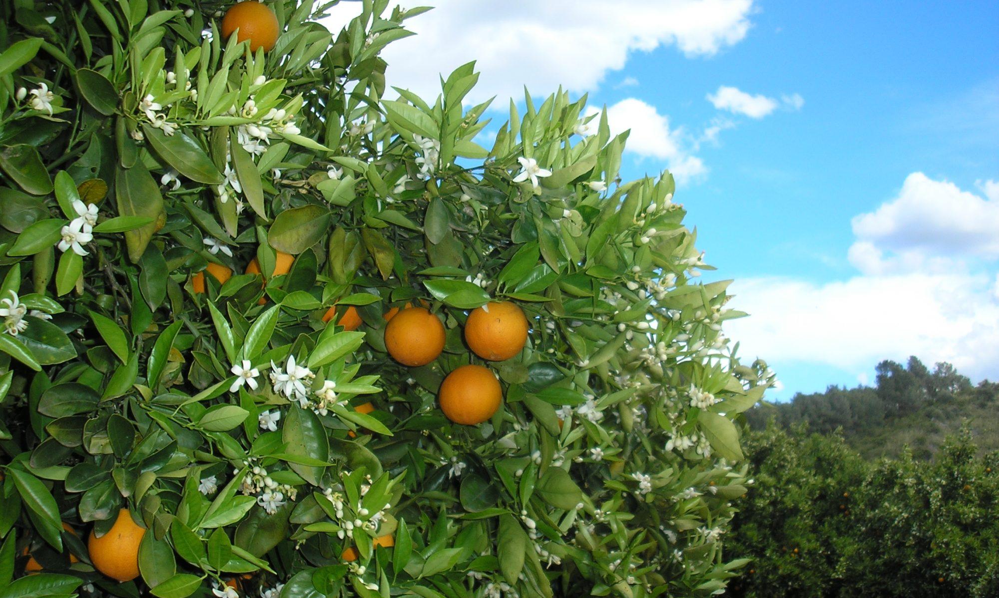 Bienvenidos al blog de Premium Mediterranean